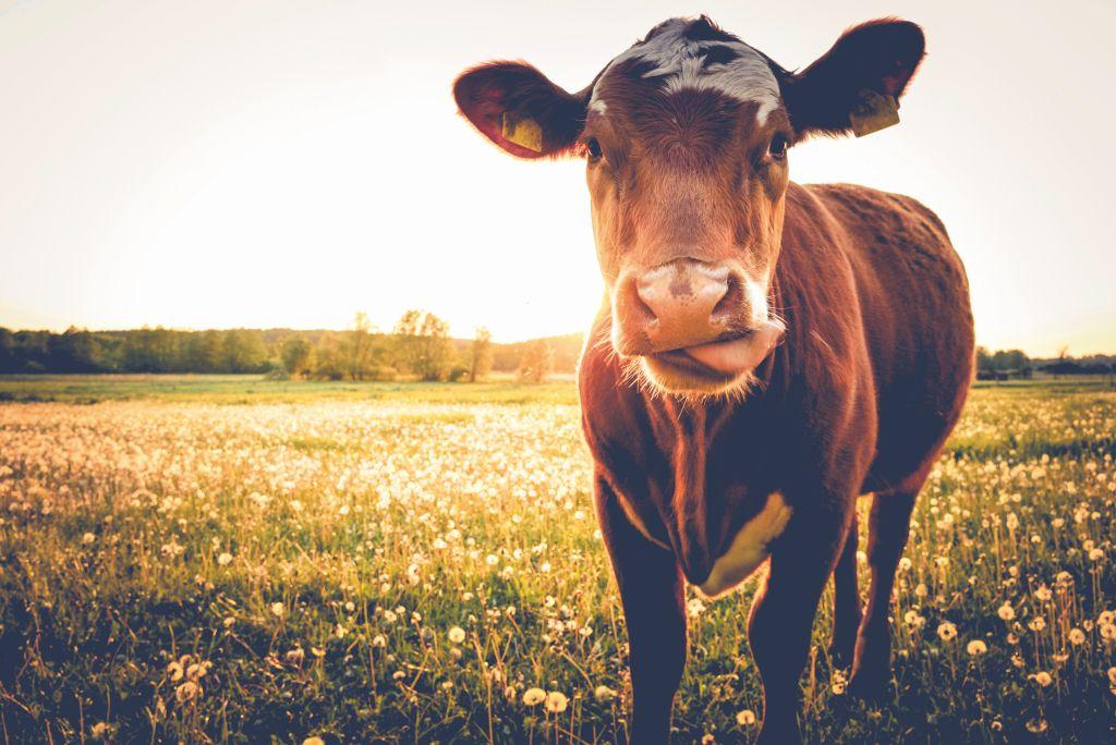Leben, Liebe, Landwirtschaft - MUH-tig in die Zukunft